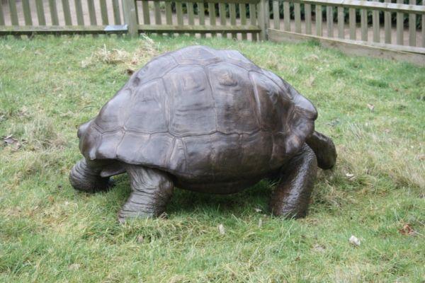 Bronze Tortoise Statue Bronze Statue Of Large Tortoise Galapagos